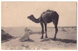 (Algérie) 022, ND Phot 458 A, Désert Du Sahara, La Prière Du Chamelier - Sonstige